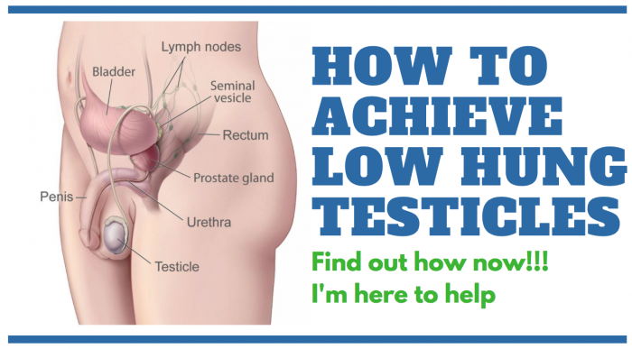 image showing how to achieve low hung testicles