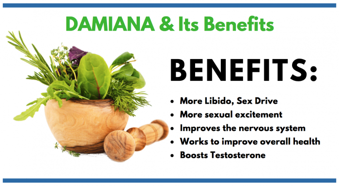 Damiana feature image for mens consumer information article