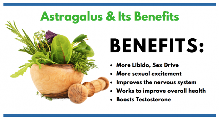 Astragalus FEATURED IMAGE FOR CONSUMER INFO ARTICLE